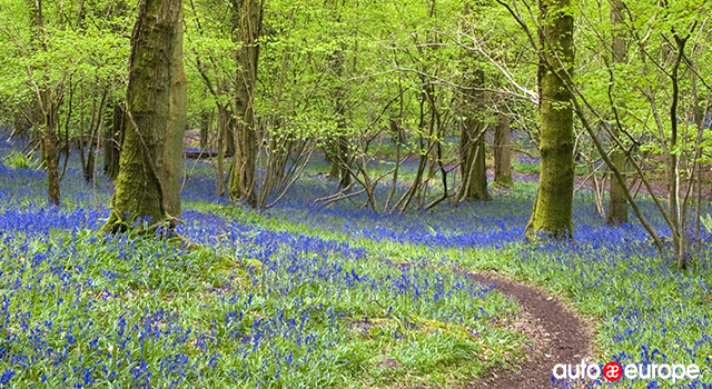 south-west-england-forest-of-dean